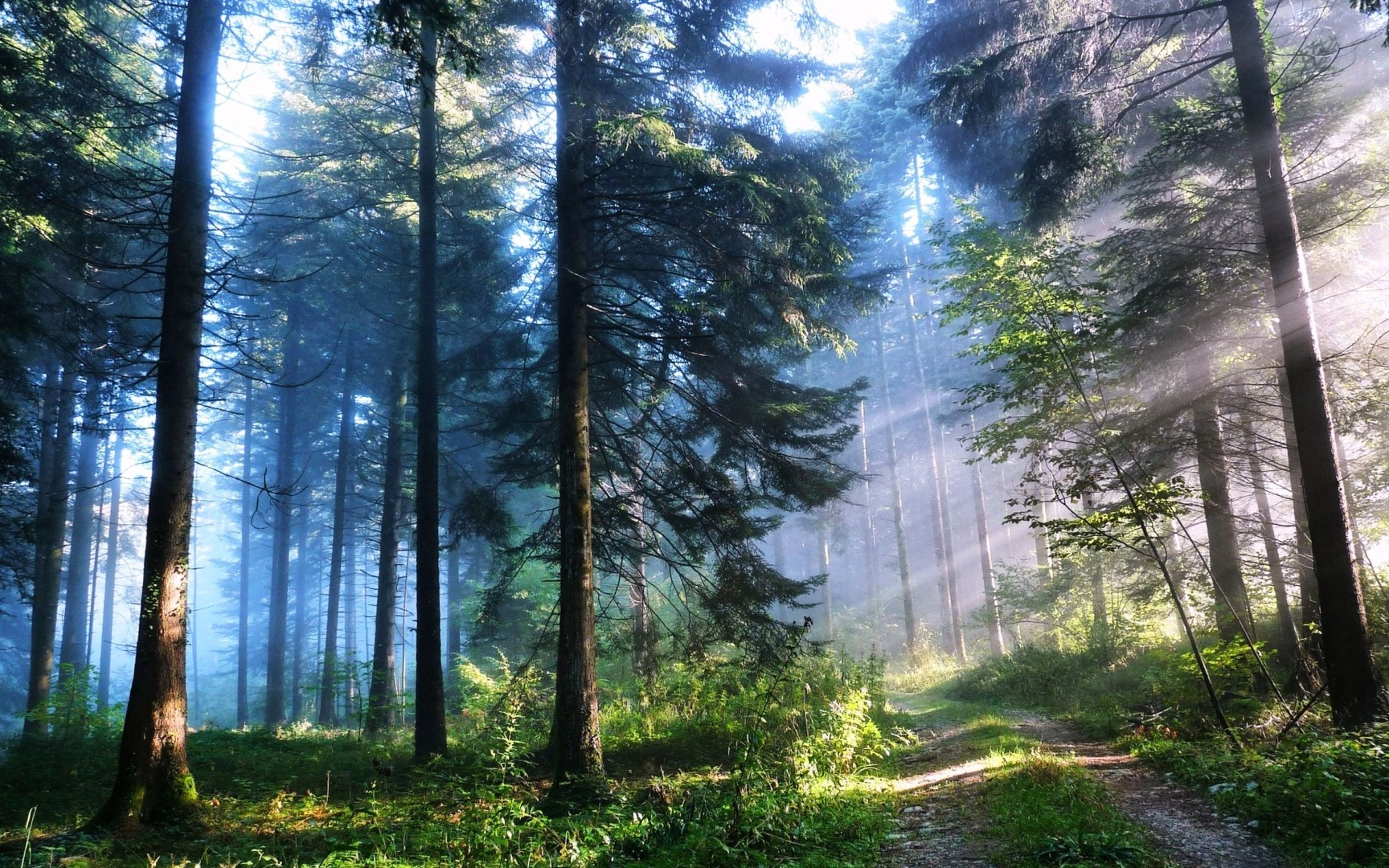 Forest Wallpaper Hd Kolpaper Awesome Free Hd Wallpapers