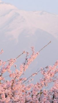 Aesthetic Sakura Wallpaper