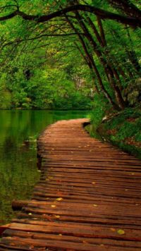 Forest Path Wallpaper Iphone