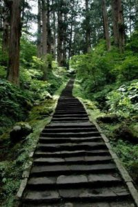 Forest Stairs Wallpaper
