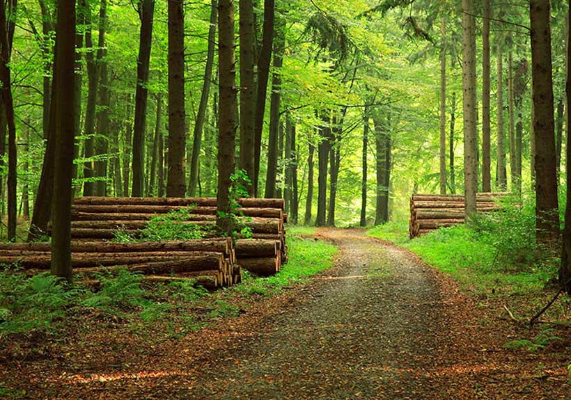 Forest Wallpaper Desktop Kolpaper Awesome Free Hd Wallpapers