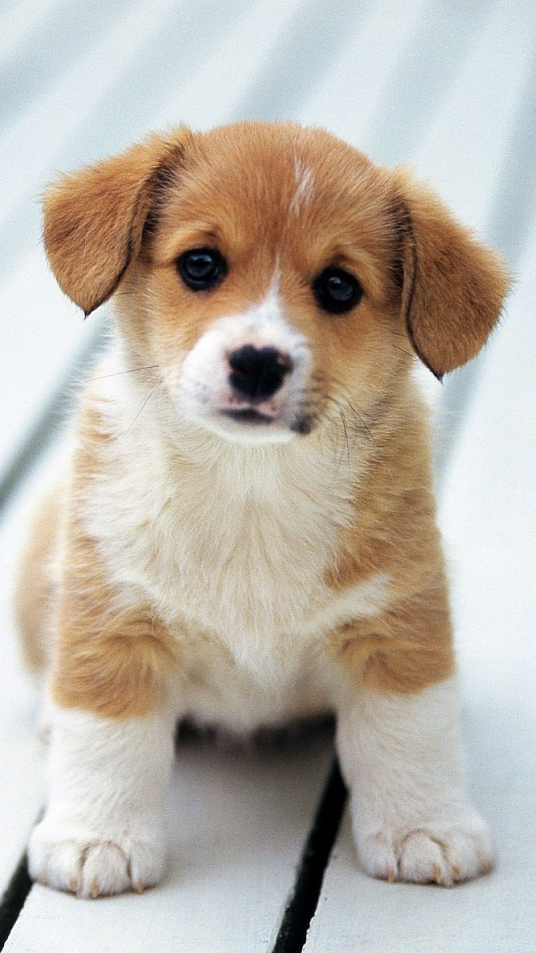 Baby Dog Iphone Wallpaper Kolpaper Awesome Free Hd Wallpapers