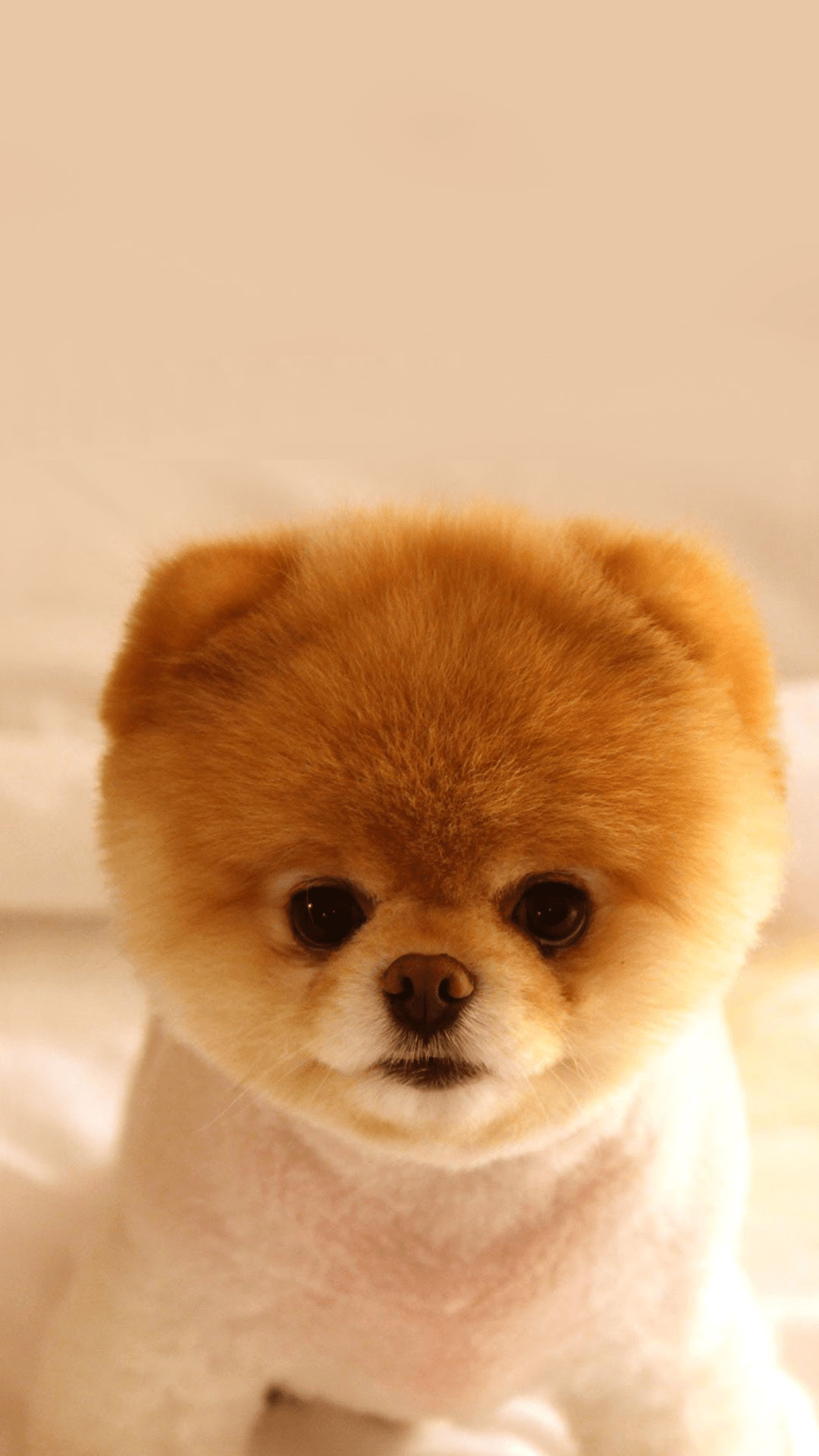 Baby Dog Wallpaper For Iphone Kolpaper Awesome Free Hd Wallpapers