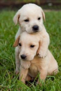 Cute Puppies Wallpaper Iphone
