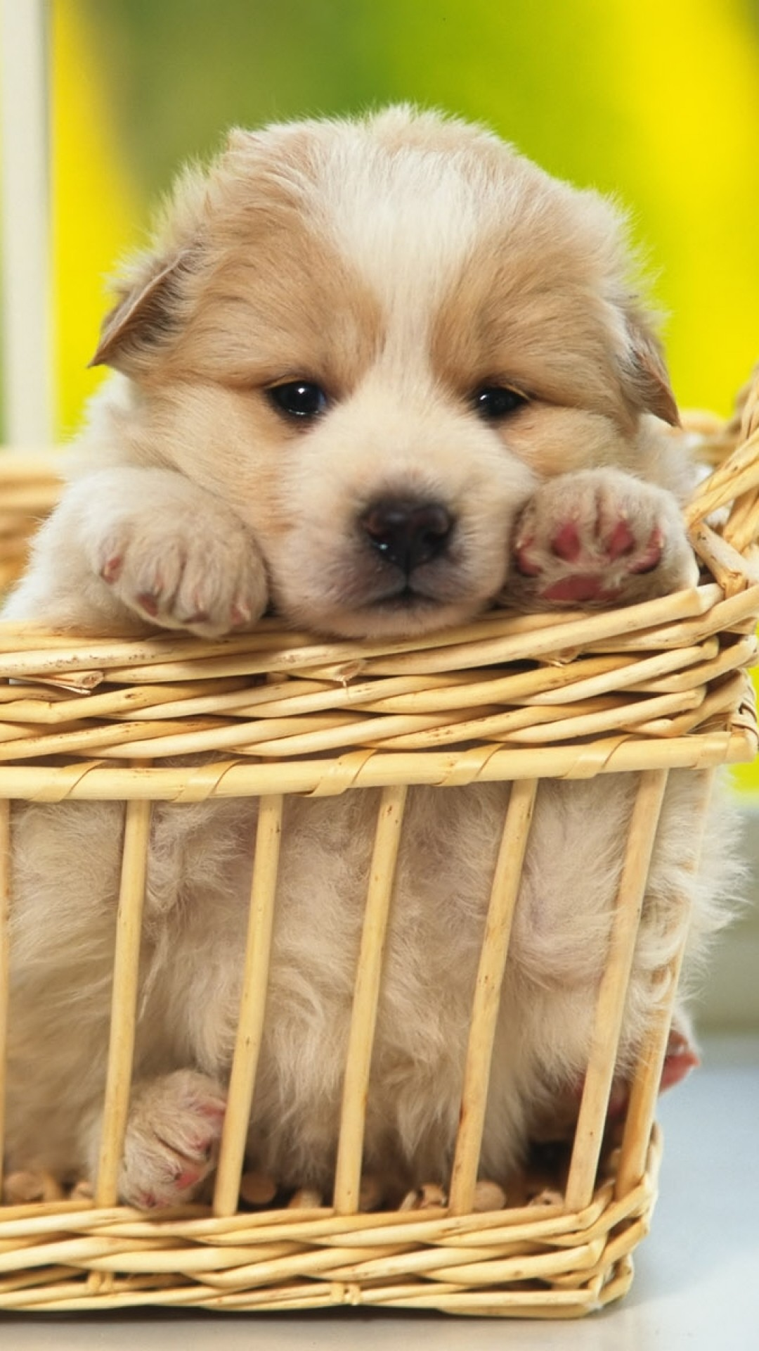 Puppy Wallpaper Kolpaper Awesome Free Hd Wallpapers