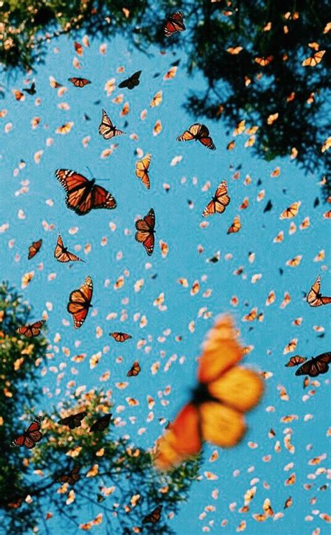 Vsco Butterfly Wallpaper Kolpaper Awesome Free Hd Wallpapers