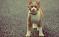 Cat Glasses Wallpaper