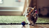Funny Cat Hd Wallpaper