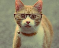 Funny Cat Wallpaper 2