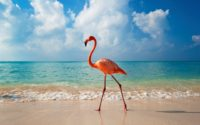 Hd Flamingo Wallpaper