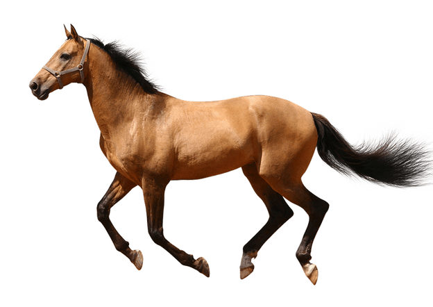 Transparent Horse Wallpaper