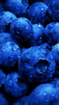 Blueberry Wallpaper 3