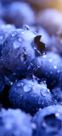 Iphone Blueberry Wallpaper 3