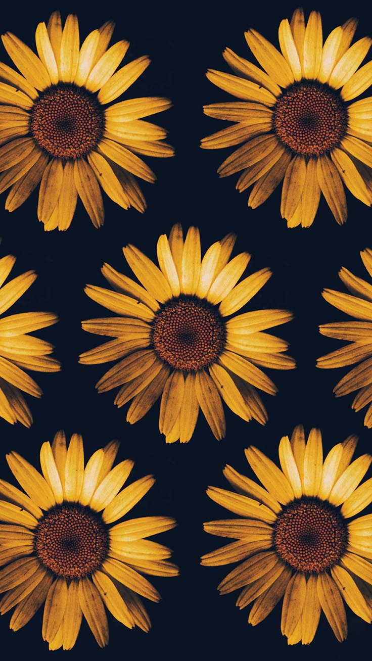 Iphone Sunflower Wallpapers 2