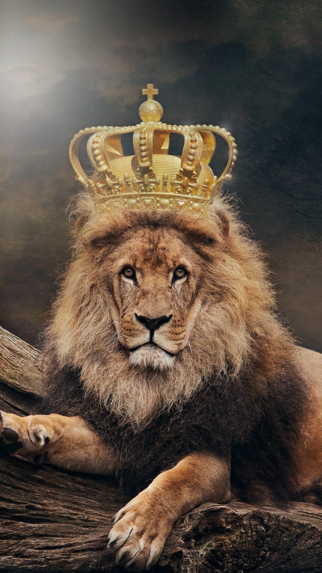 Cool Wallpapers Hd Lion