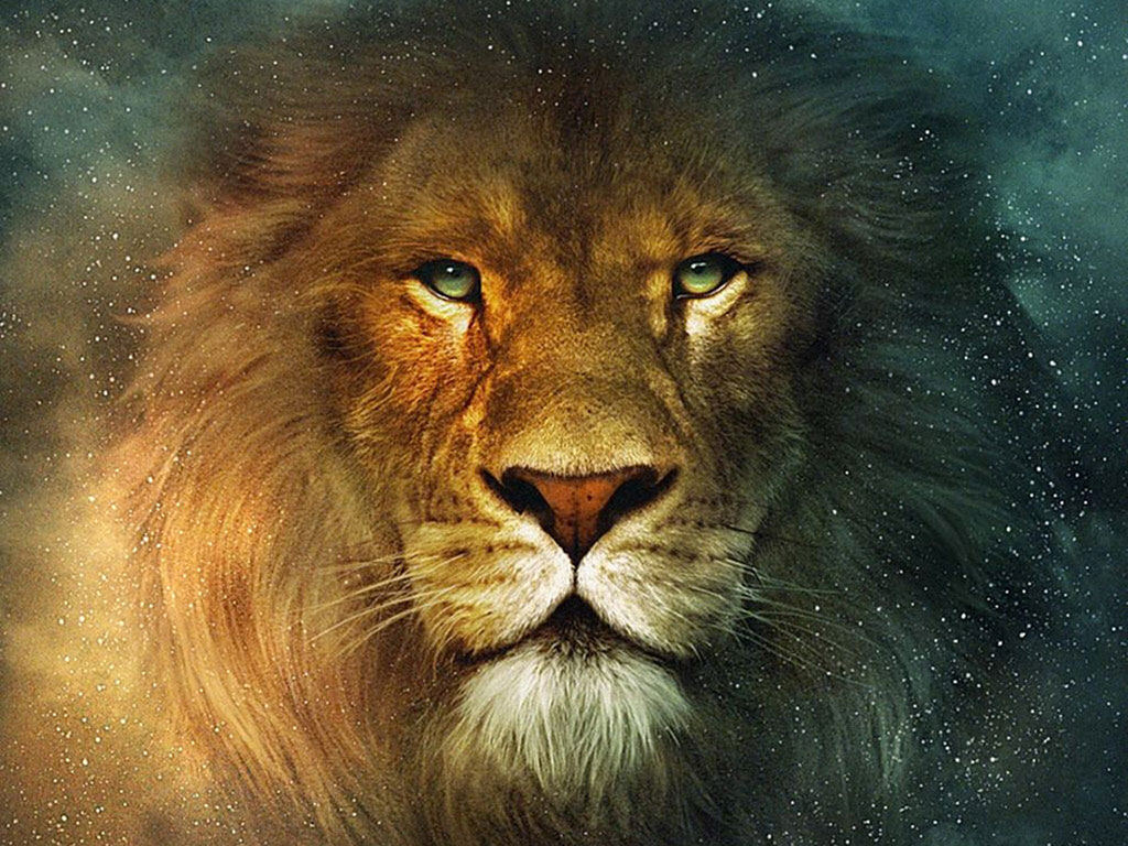 Lion Wallpapers PC