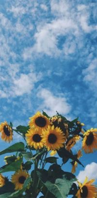 Sunflower Lockscreen