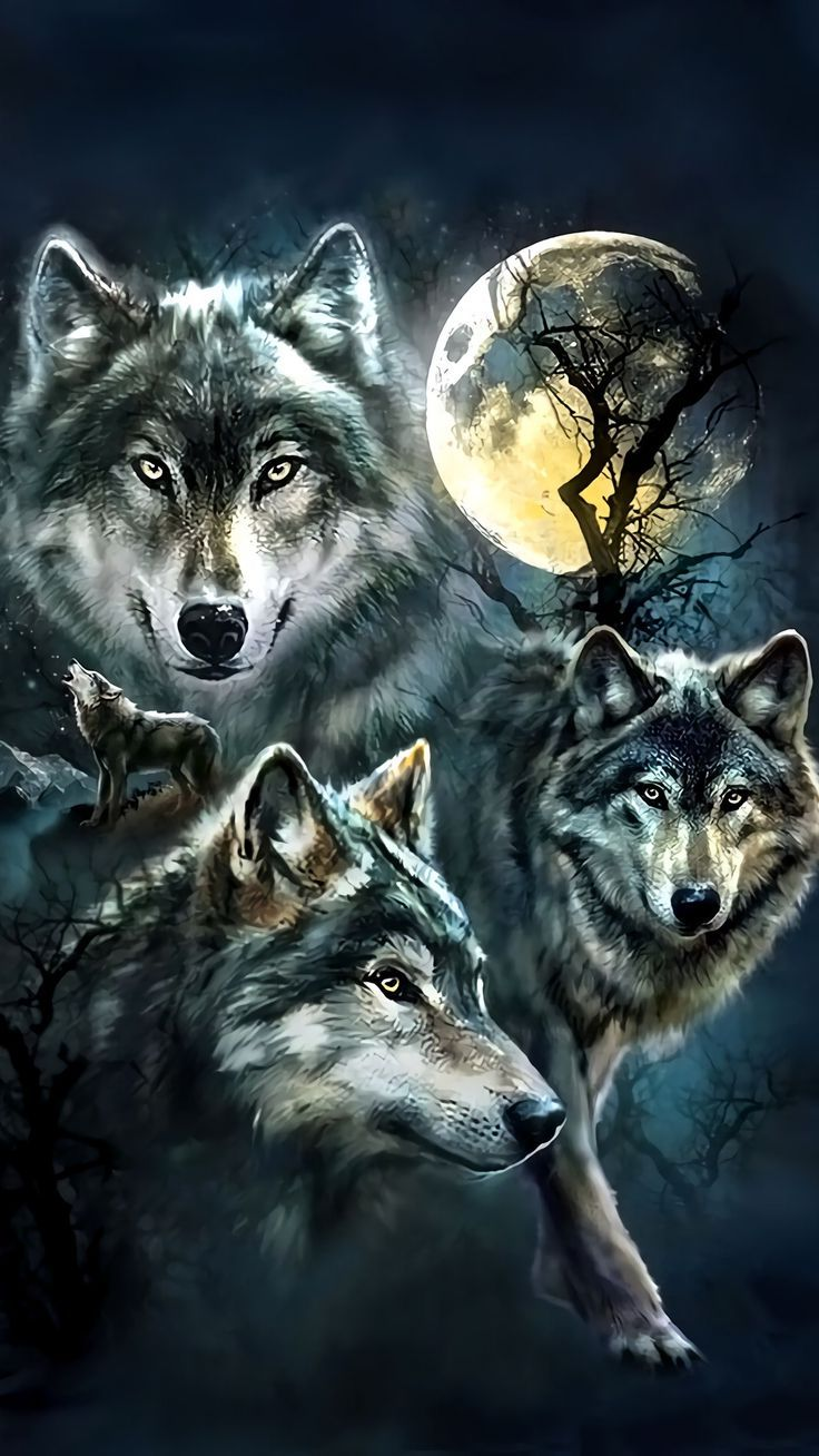 Wolf Background Images