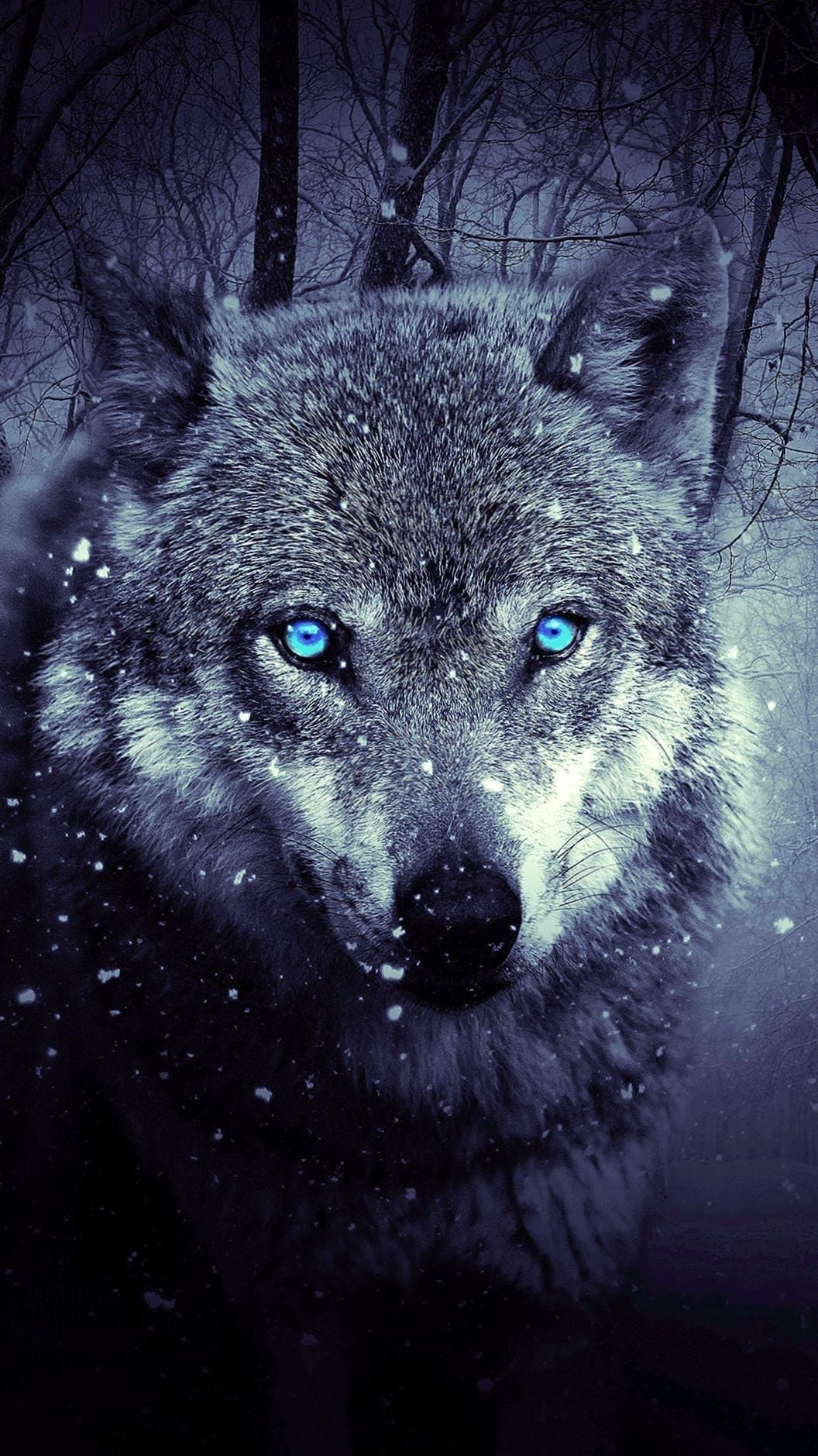 Wolf Blue Eyes Wallpaper Kolpaper Awesome Free Hd Wallpapers