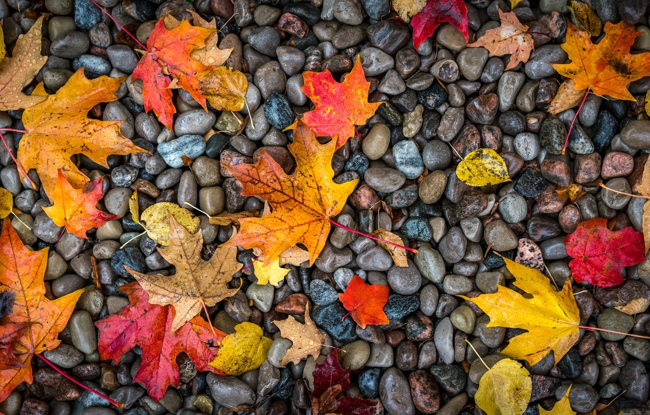 Autumn Wallpaper Pc Kolpaper Awesome Free Hd Wallpapers