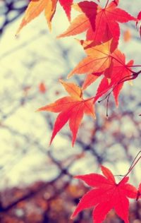 Autumn Wallpapers 4