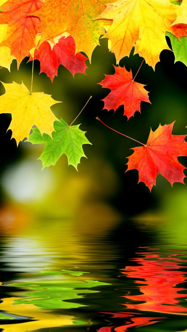 Colorful Fall Wallpaper