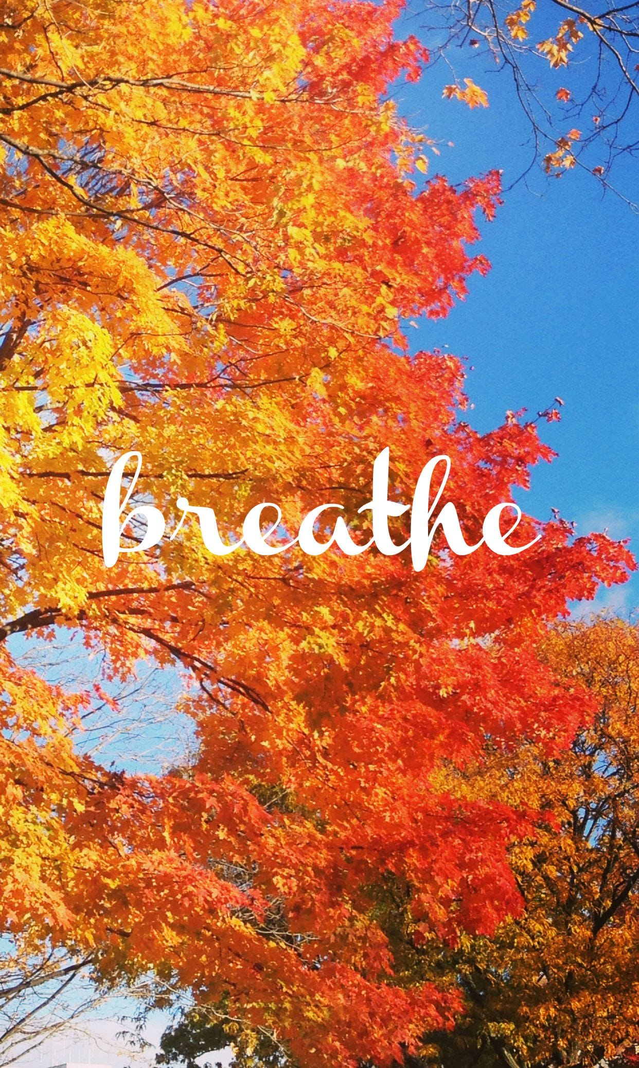 Fall Breathe Wallpaper