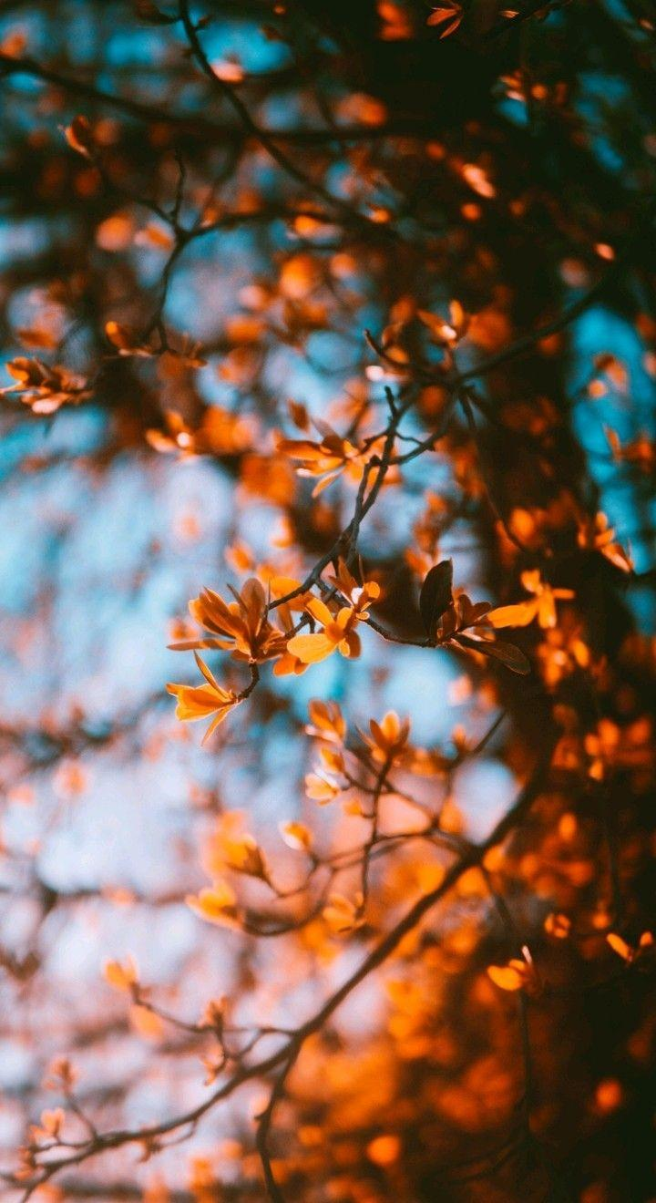 Fall Iphone Wallpaper Kolpaper Awesome Free Hd Wallpapers