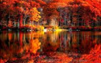 Fall Leaves Wallpaper