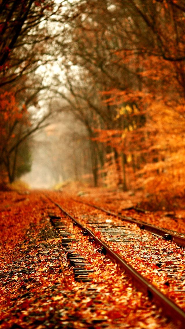 Fall Railway Wallpaper