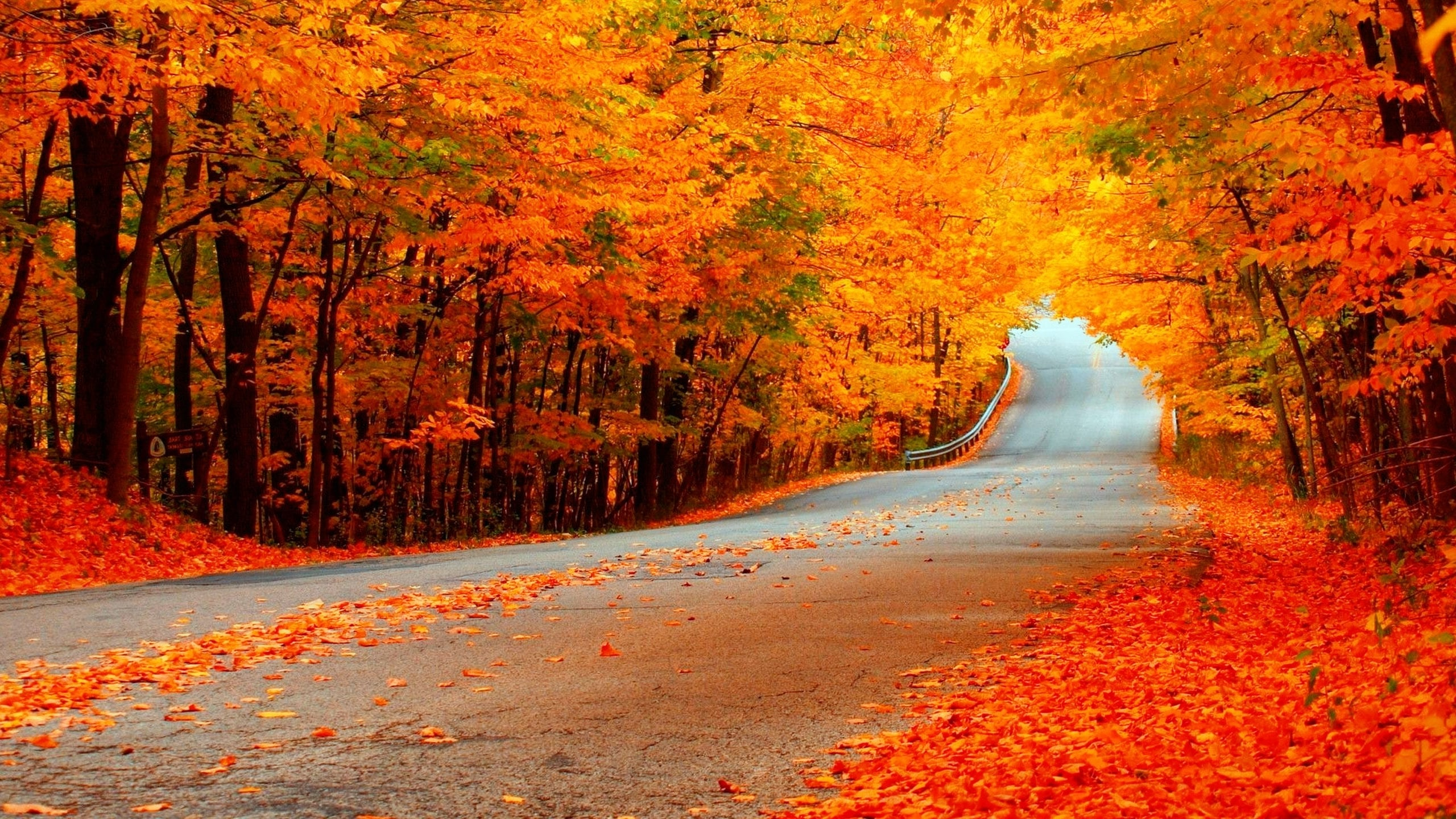 Fall Road Wallpapers