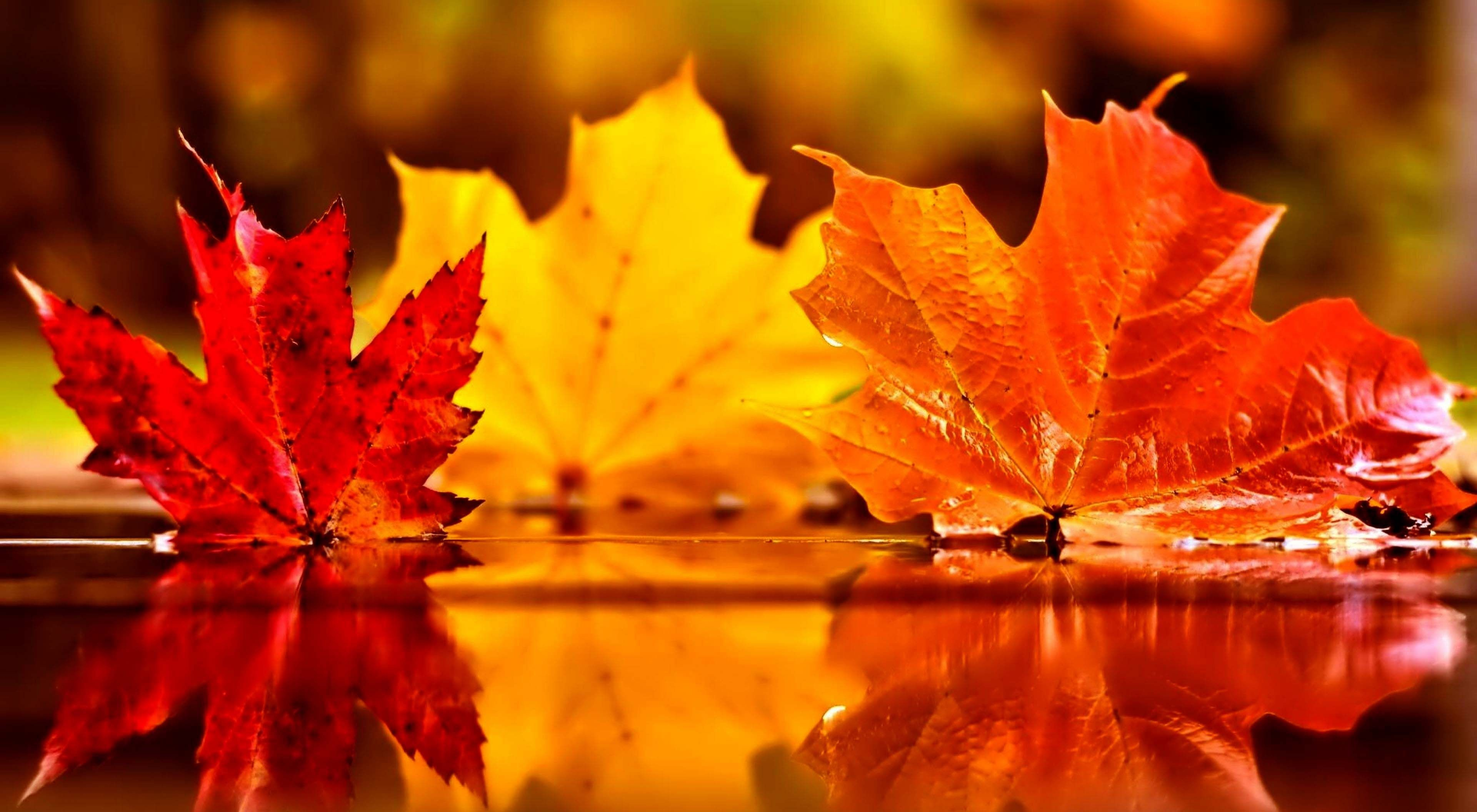 Leaves HD Wallpaper