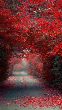 Autumn Red Wallpaper
