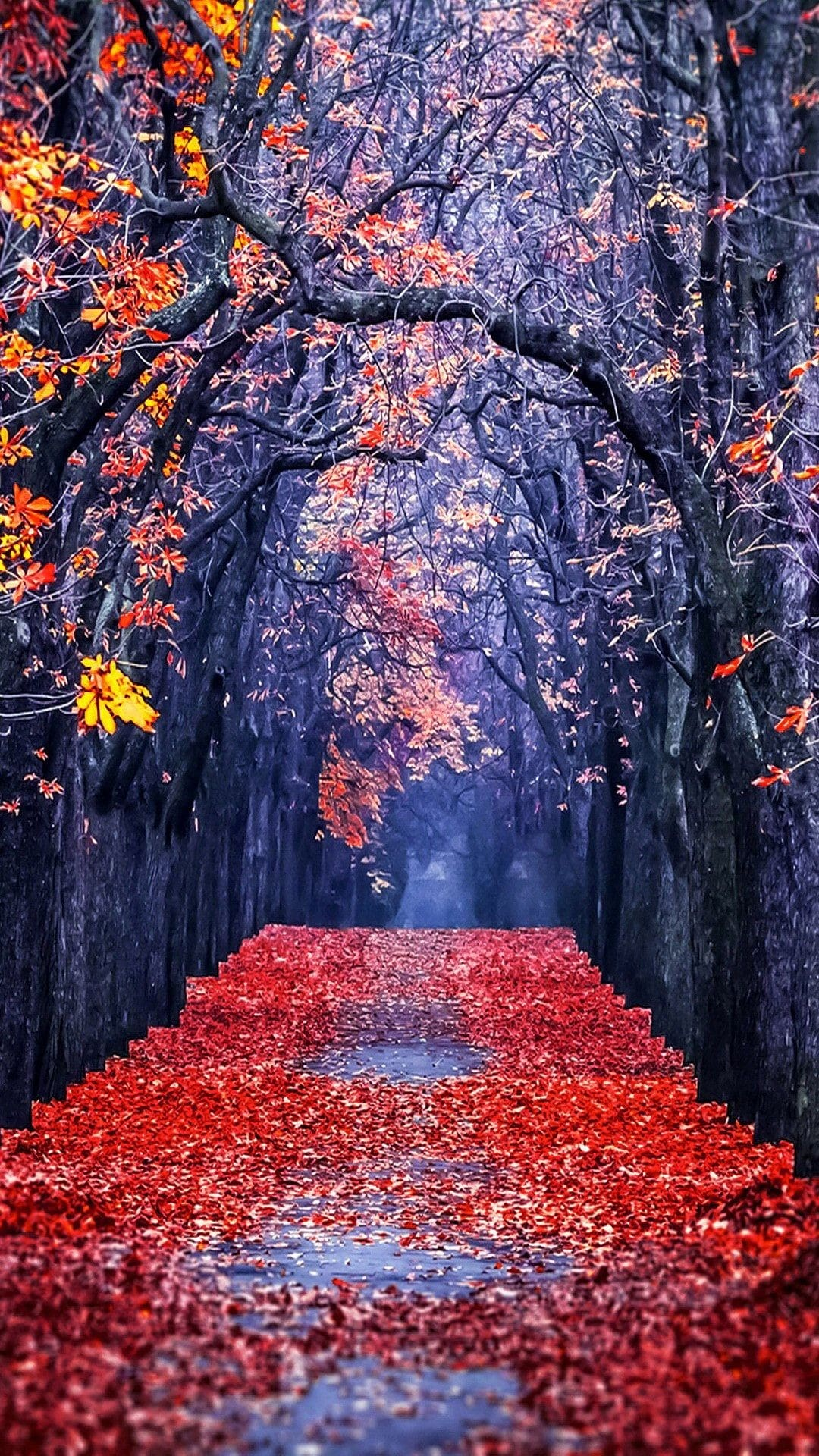 Autumn Road Wallpaper