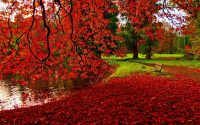 Autumn Leaves Wallpaper Desktop