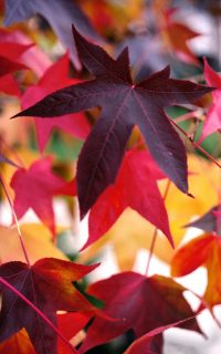 Colorful Autumn Leaves Wallpaper 2