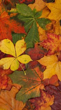 Colorful Autumn Leaves Wallpaper