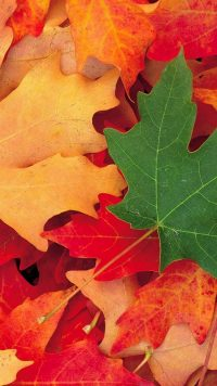 Colorful Leaves Wallpaper 2