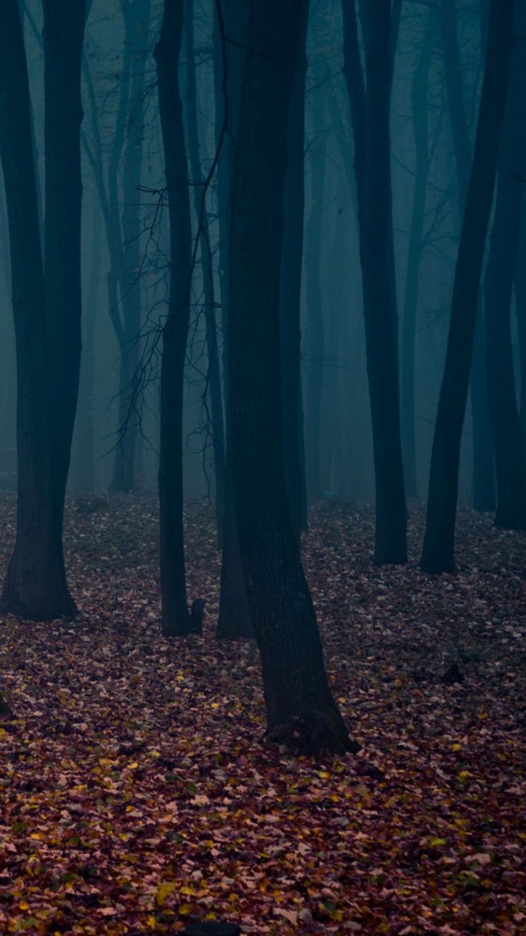 Dark Forest Wallpaper - KoLPaPer ...