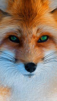 Fox Wallpaper iPhone