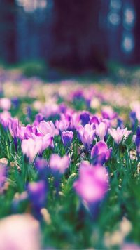 Garden Flowers Wallpapers