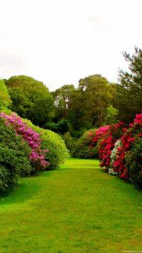 Garden iPhone Wallpaper