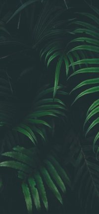 Jungle Plants Wallpaper