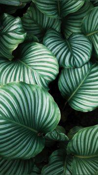 Plant Wallpaper 4