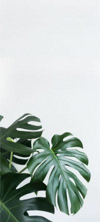 Plant Wallpaper 5