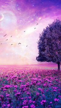 Purple Garden Wallpaper