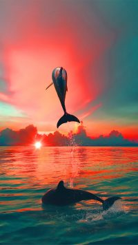Sunset Dolphin Wallpaper 3