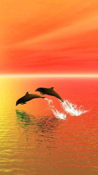 Sunset Dolphin Wallpaper 4