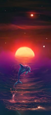 Sunset Dolphin Wallpaper 5