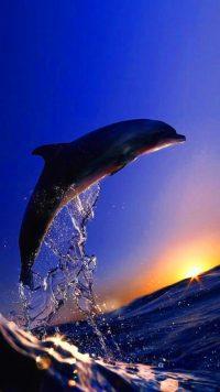 Sunset Dolphin Wallpaper 6